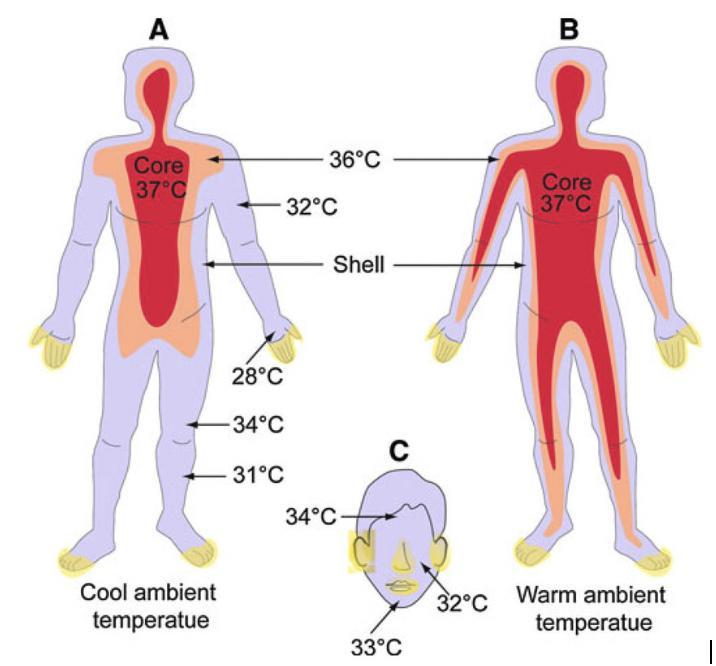 EST Body vs Skin Temperature